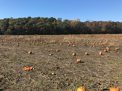 "Active Managers Selling the ""The Great Pumpkin"""